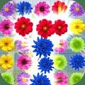 儿童花朵消消乐安卓版