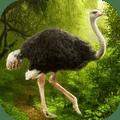 鸵鸟模拟器中文版