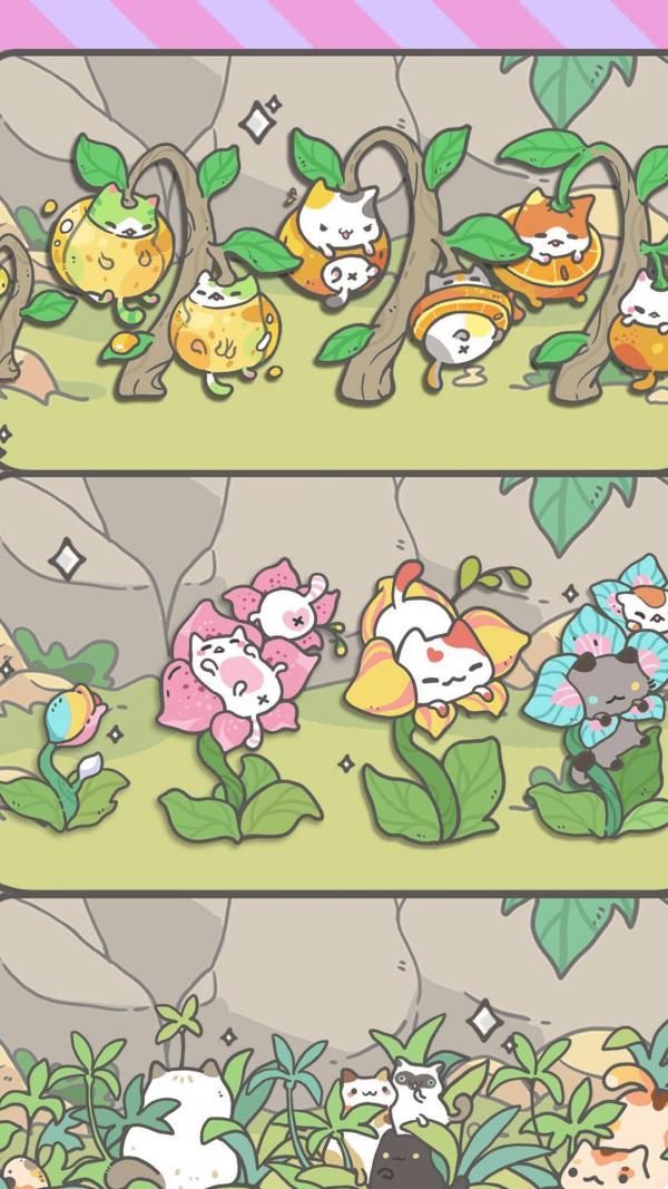 我的猫盆栽